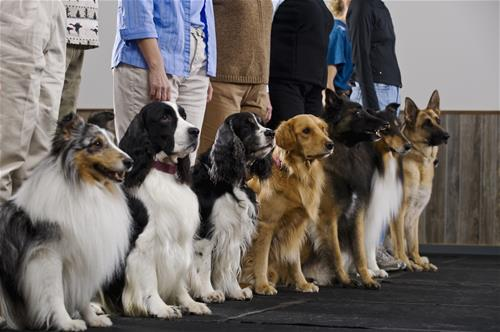 Dog Training Photo