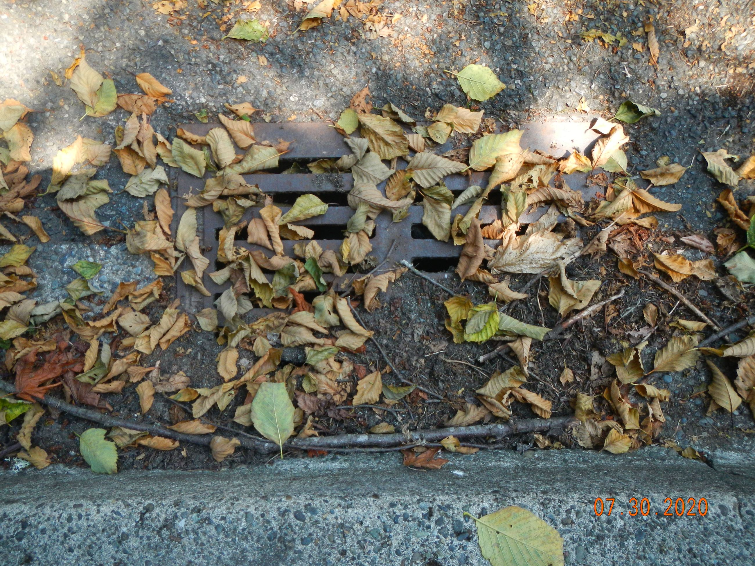 Leaves in catch basin
